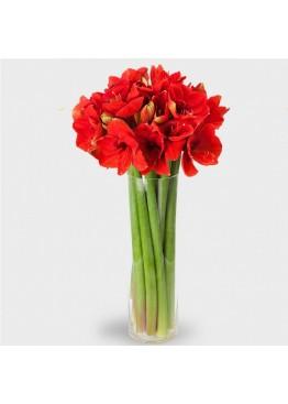 9 амариллисов в вазе