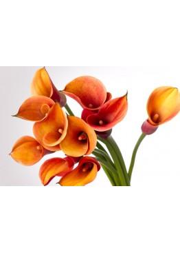Оранжевые каллы