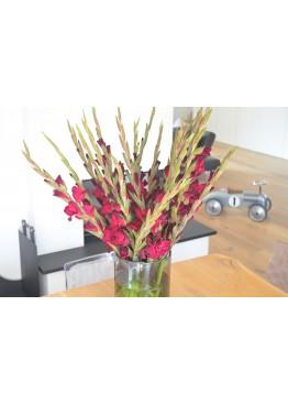 25 бордовых гладиолусов в вазе