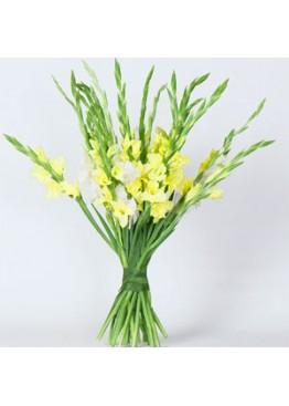 Желто-белый микс из гладиолусов