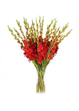 29 красных гладиолусов