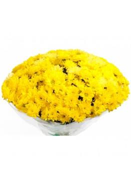 Эти желтые хризантемы