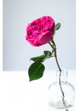 Розы Баронесса поштучно