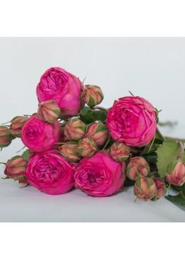 Розы Пинк Пиано