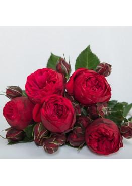 Розы Ред Пиано