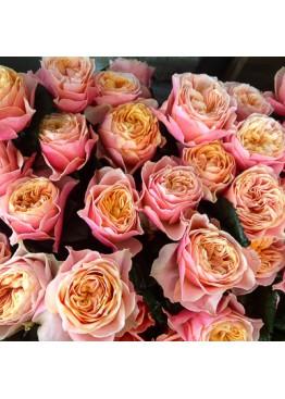 Розы Вувузела поштучно