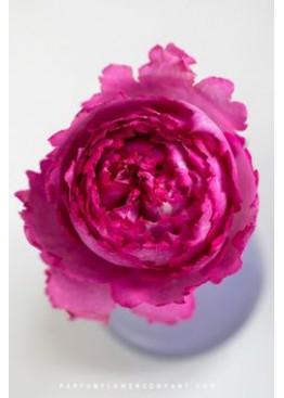Розы Ив Пьяже