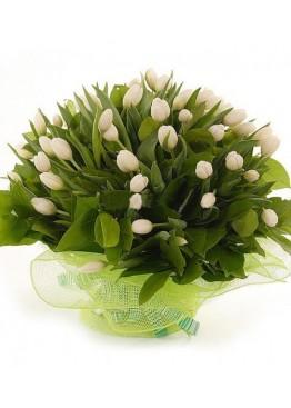 75 белых тюльпанов